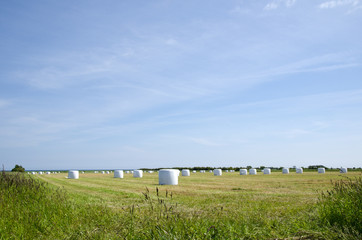 Field of plastic bales
