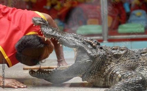 Plexiglas Krokodil crocodile