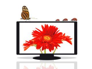 Flat TV mit Gerbera und Insekten