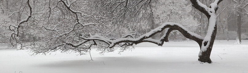 During snow storm in Central Park, New York city