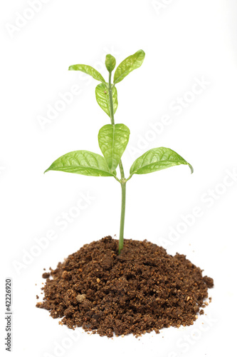 Fotobehang Planten Baby plant isolated on white background