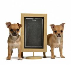 Two puppiea with menu blackboard