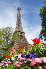 Eiffel Tower with spring tulips in Paris,  France