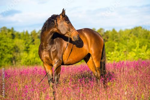 Fototapeta Bay horse portrait in pink flowers