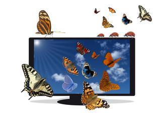 Flat TV mit blauem Himmel und Insekten
