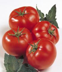 Pomodori 01
