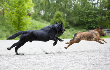 Two dogs playing happily at a park