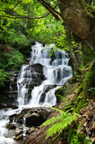 Fototapety waterfall in green forest