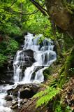 Fototapety waterfall in green forest