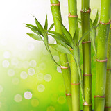Fresh Bamboo on Summer background