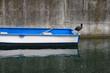 barca con folaga nera sul fiume