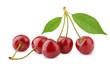 Sweet cherry berry fruit