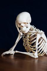 skelett stützt am tisch
