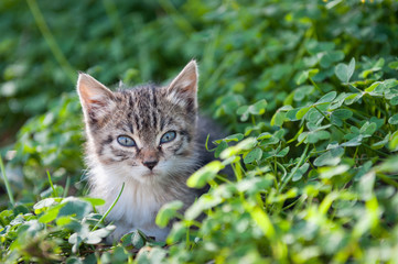 Cute young cat in grass