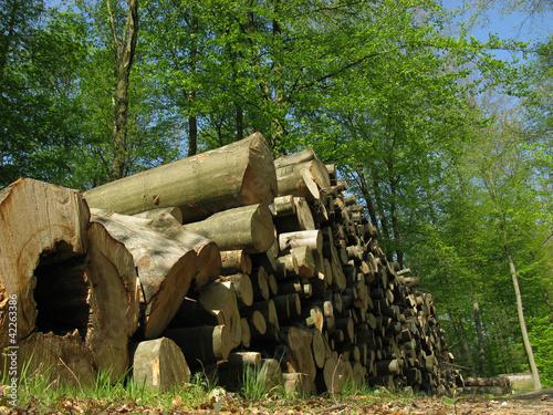 Holzstapel im Buchenwald