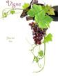 vigne, vin, grappe de raisin