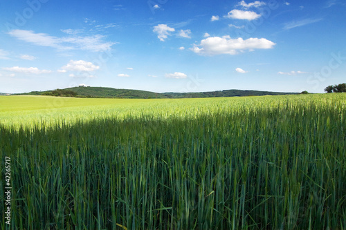 Amazing spring/summer countryside - green meadow, blue sky