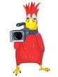 Funny Parrot. Cameraman.
