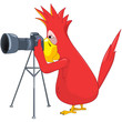 Funny Parrot. Photographer.