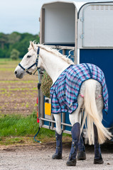 Horse and Box