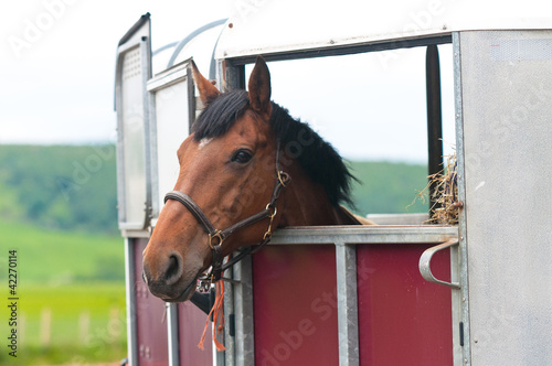 Foto op Plexiglas Paardensport Horsebox