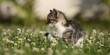 Katzenwelpe entdeckt die Welt