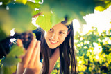 Fototapety Grapes in a vineyard being checked by a female vintner