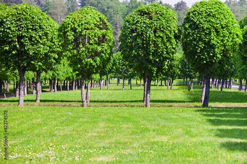 green lawn and row of trees in summer day