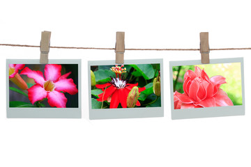 Polaroid templates with flowers