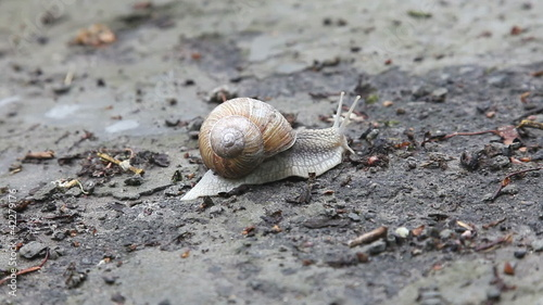 Snail crawling on the ground, time lapse