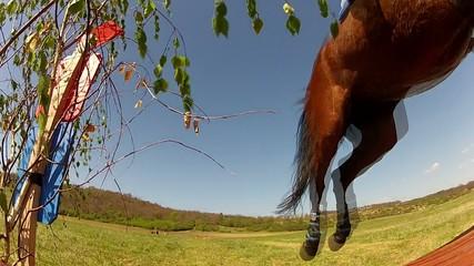 rider show jumping