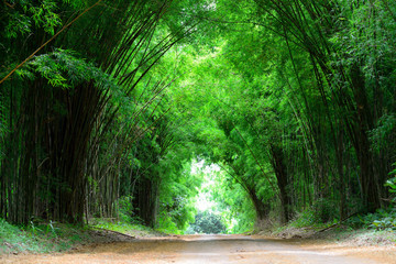 The high bamboo cover the clay road