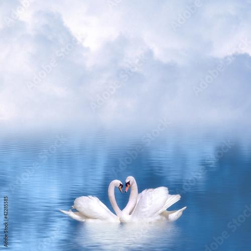 Foto op Plexiglas Zwaan Graceful swans in love