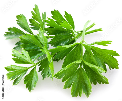 Bunch of green coriander