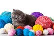 kitten with balls of threads
