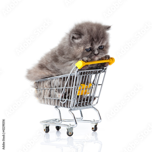 little kitten sitting in shopping cart isolated on white.