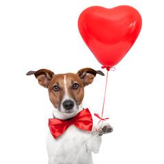 dog in love