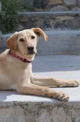 Dog in Earthquake  Ghost Village of Messa Gonia Santorini