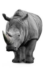.Rhino