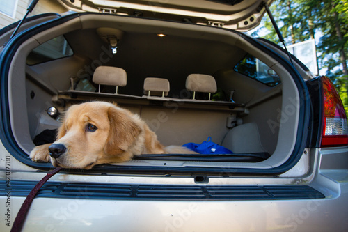 road trip for a dog
