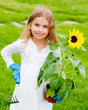 Gardening - lovely girl planting sunflower