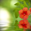 reflejo en el agua de la flor