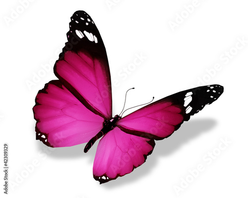canvas print picture Violet butterfly, isolated on white