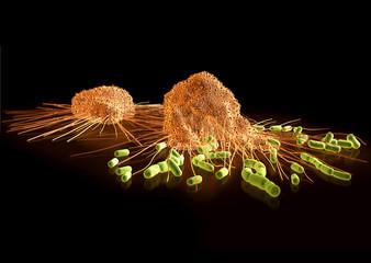 Makrophagen auf der Jagd nach Streptokokken