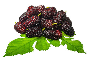 Group of mulberries with a leaves