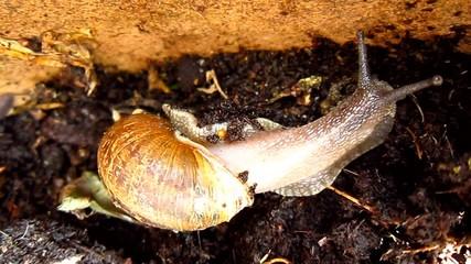 snail in plantpot