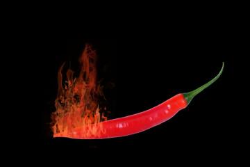 Brennende Chilischote