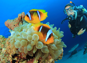 Clownfish and Scuba Diver