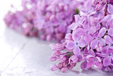 Fototapety Lilacs in closeup
