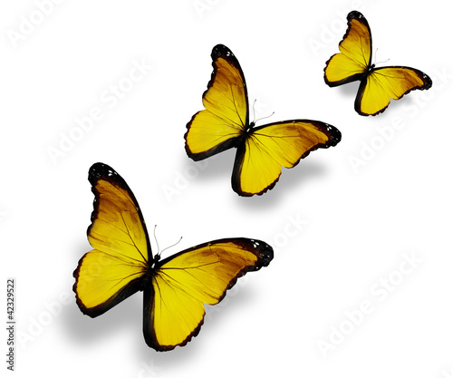 Three yellow butterflies, isolated on white